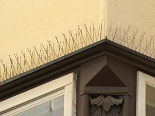Bird-spikes.jpg